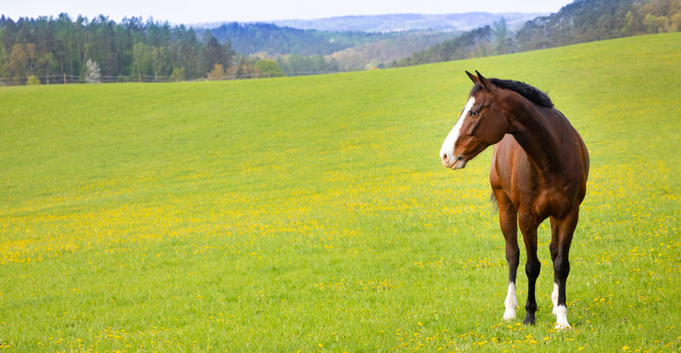 Smart-Horse-Nutrition-About-Us