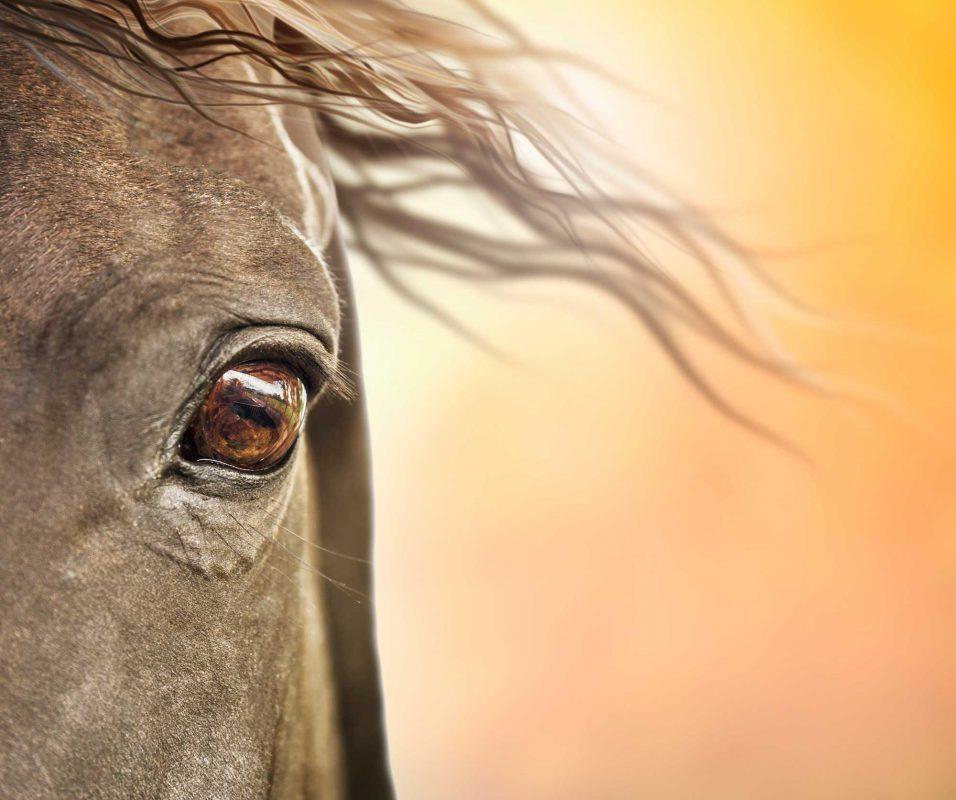 Smart-Horse-Nutrition-Horse-Eye