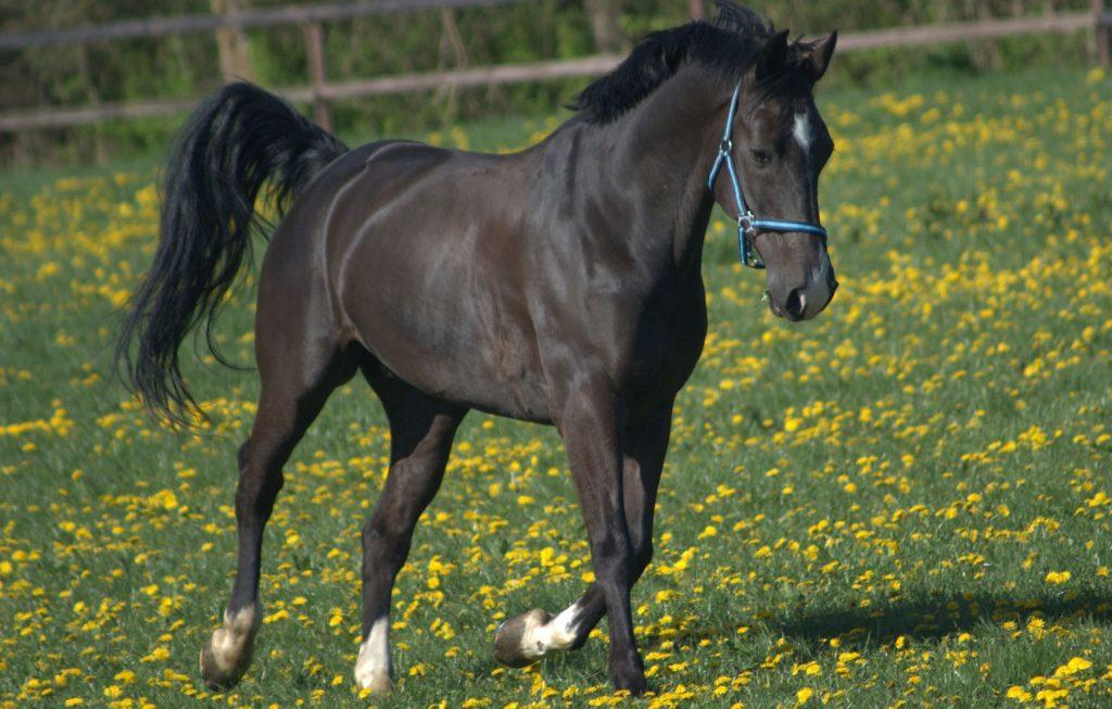 spring-horses-feeding