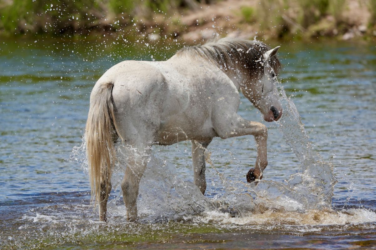 horse-hot-weather