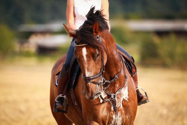 sweaty-horse